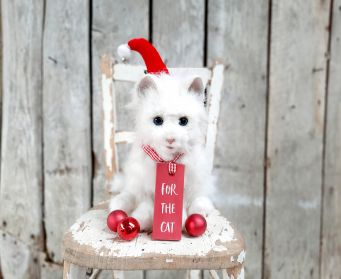 For The Cat Red